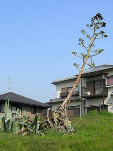 Ryuzetsu1
