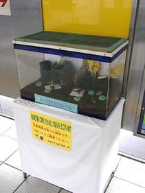 Suzumushi1