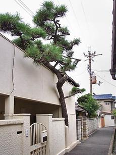 Matsuya1