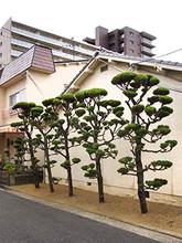5trees1