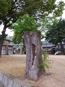 Mikinashi1