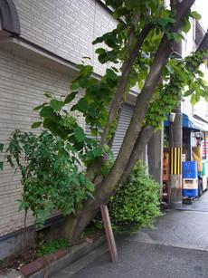 Tsukkae2