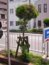 Kaizukaibuki2