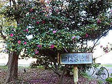 Shinsenri4