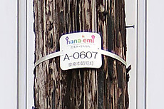 Hanaemi4