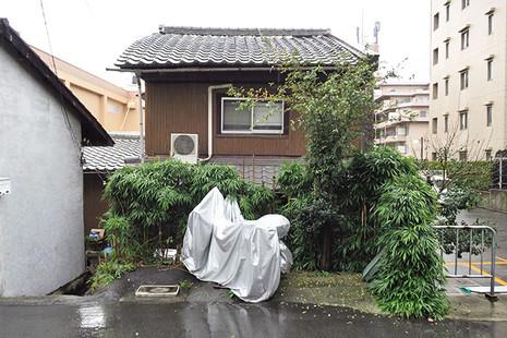Shokubutsu1