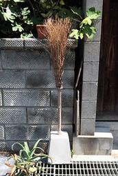 Sakasahouki1