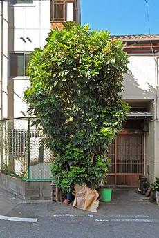 3trees1