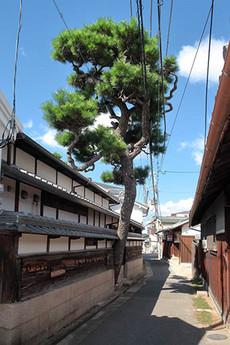 Kuroudo1