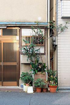 Gomibiwa1