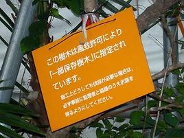 Fuchiki