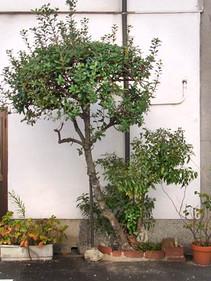 Tsuboniwa1