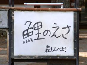 Koishika1