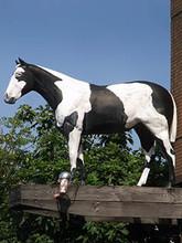 Holsteinppoi2