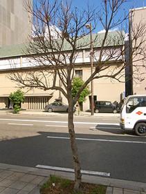 Minomushi5