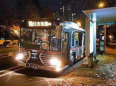 Zebrabus1