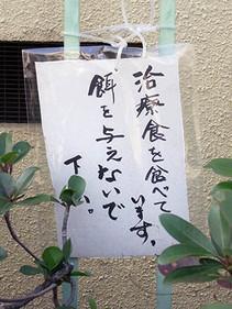 Chiryoshoku1