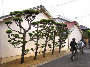 5trees2