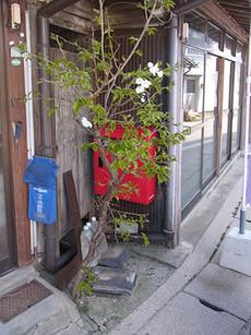 Hazakura1