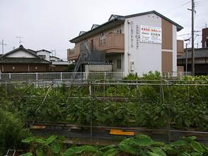 Yokunaaru2