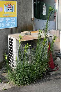 Takasago1