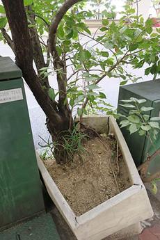 Sakuragawa2b