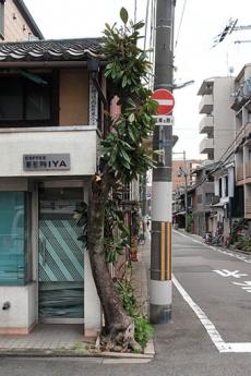 Ikezuboku1