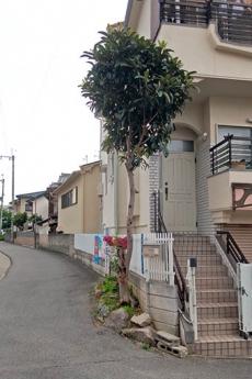 Kirarebiwa1