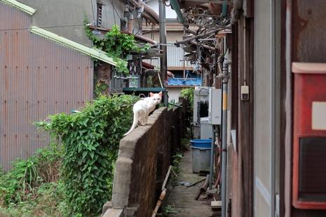 Nagasaki1neko